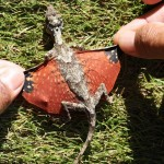 tiny-indonesian-dragon