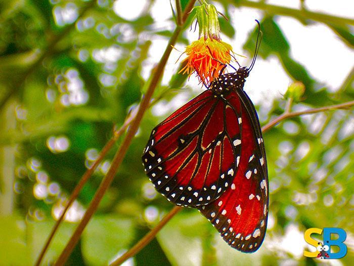 Goa-Tourism-Nature