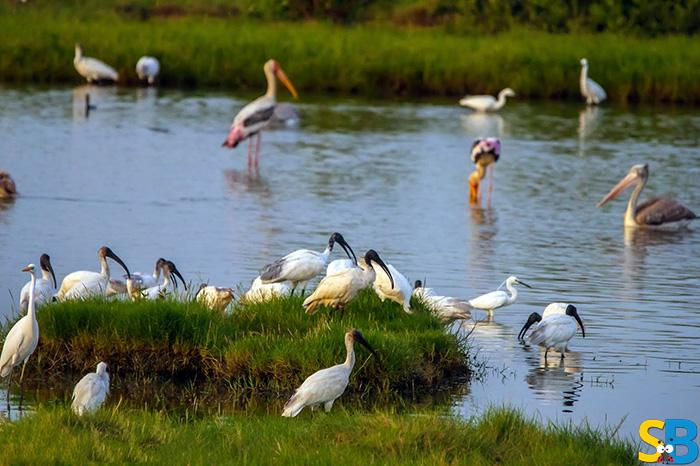 Pitti Bird Sanctuary