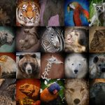 10-MOST-ENDANGERED-SPECIES-YOU-MUST-KNOW