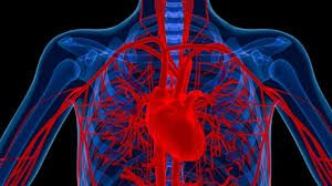 blood-vessels