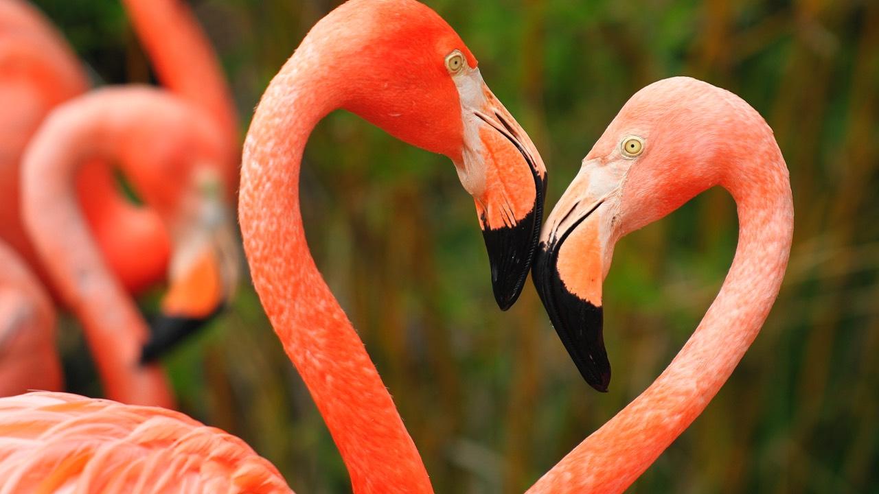 World's 10 Most Strange Animal Mating Rituals - SmuGG BuGG