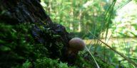 Magic Mushroom Use